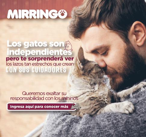 Sorpréndete  con los lazos que crean los gatos con sus cuidadores