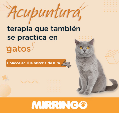 La acupuntura terapia para gatos