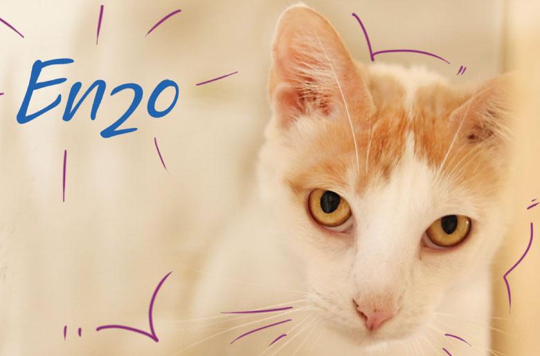 Enzo es un gatito positivo para sida felina