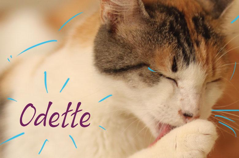 Conoce a la gatita Odette positia para leucemia felina