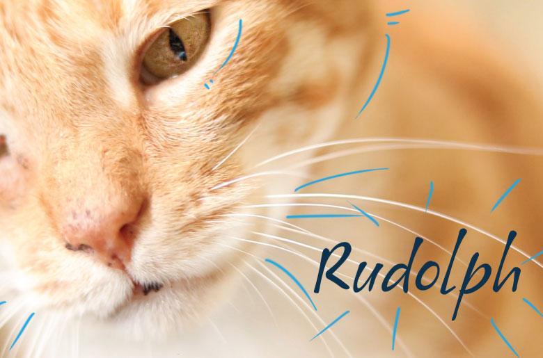 Rudolph es un gato positivo para leucemia