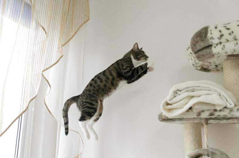 Espacios altos para los gatos