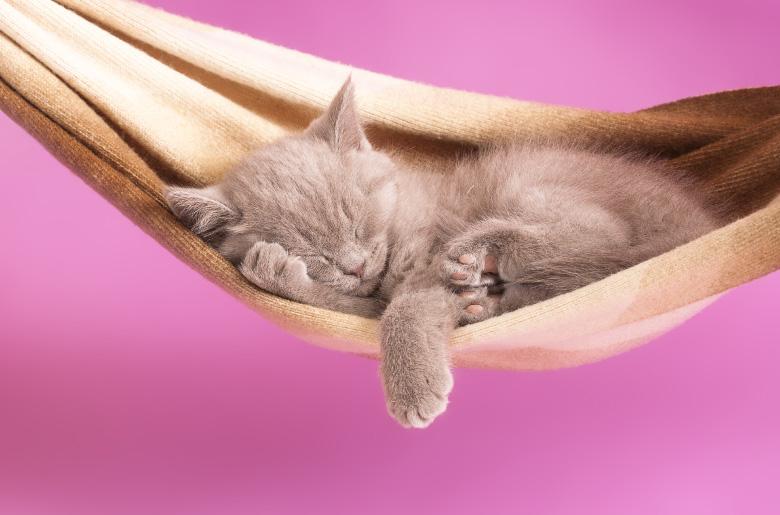 Hamacas para que los gatos duerman