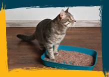 El cuidado de la arena de los gatos