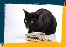 Alimento para gato Mirringo