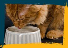 El agua limpia de los gatos