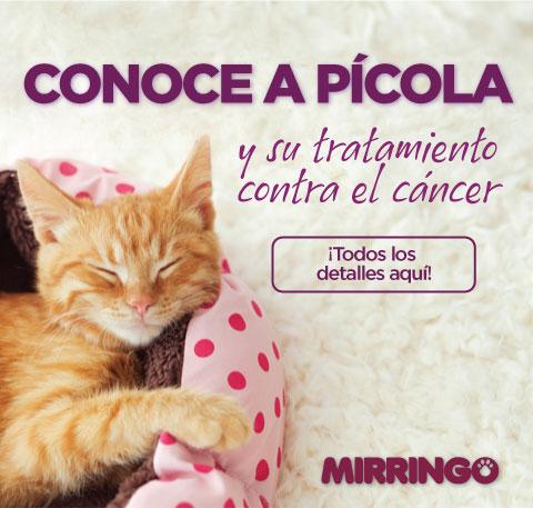 Gatos positivos para cáncer oral