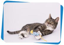 Desparasitación en los gatos