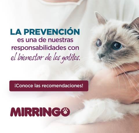 La prevención y el bienestar de los gatitos