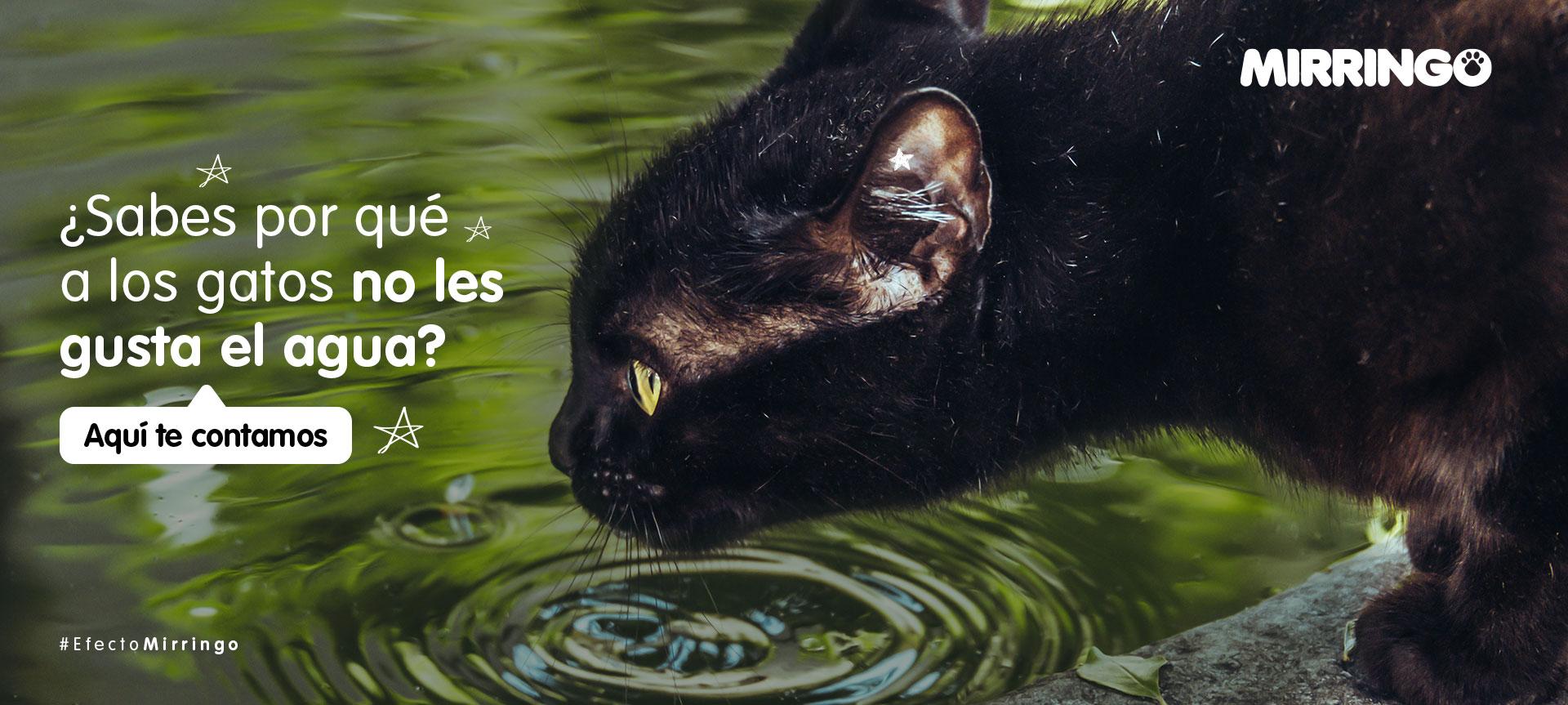 Relación de los gatos con el agua ¿buena o mala?