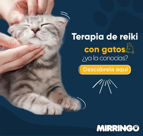 Terapia reiki en gatos
