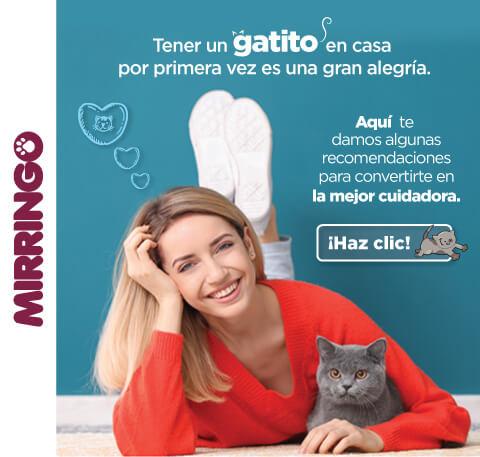 Consejos para la adaptación de tu gatito en casa