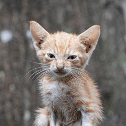 Adopta a Albus un gatico de 2 meses