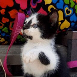 Adopta a Granada una gatica de 2 meses