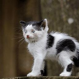 Adopta a Minerva una gatica de 2 meses