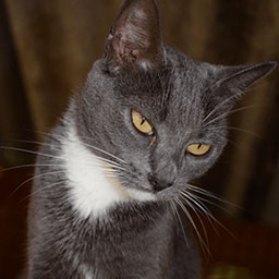 Adopta a Ágato un gato de 5 años