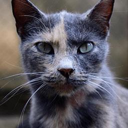 Adopta a Melcocha una gata de 4 años