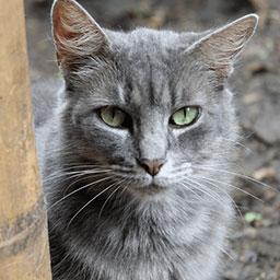 Adopta a Peluza una gata de 5 años