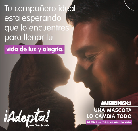 Adoptar tu gato ideal con Mirringo