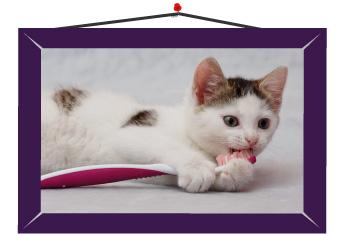 Rutinas de limpieza en los dientes de tu gato