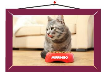 Alimento que ayude al cuidado de la dentaura del gato