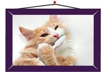 Limpieza con pasta especial para mascotas