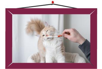 Lavarle tres veces los dientes a los gatos en semana