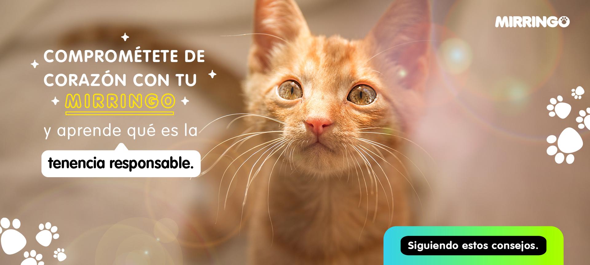 ¿Qué es la tenencia responsable en gatos?