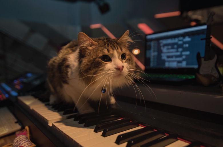 Kaoss el gato de Kata Otalvaro